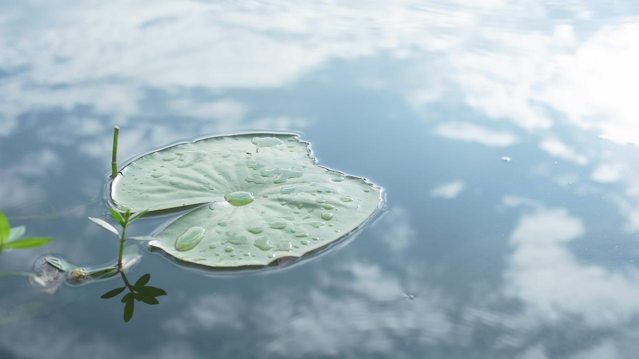 lotus-leaf-639285_1280