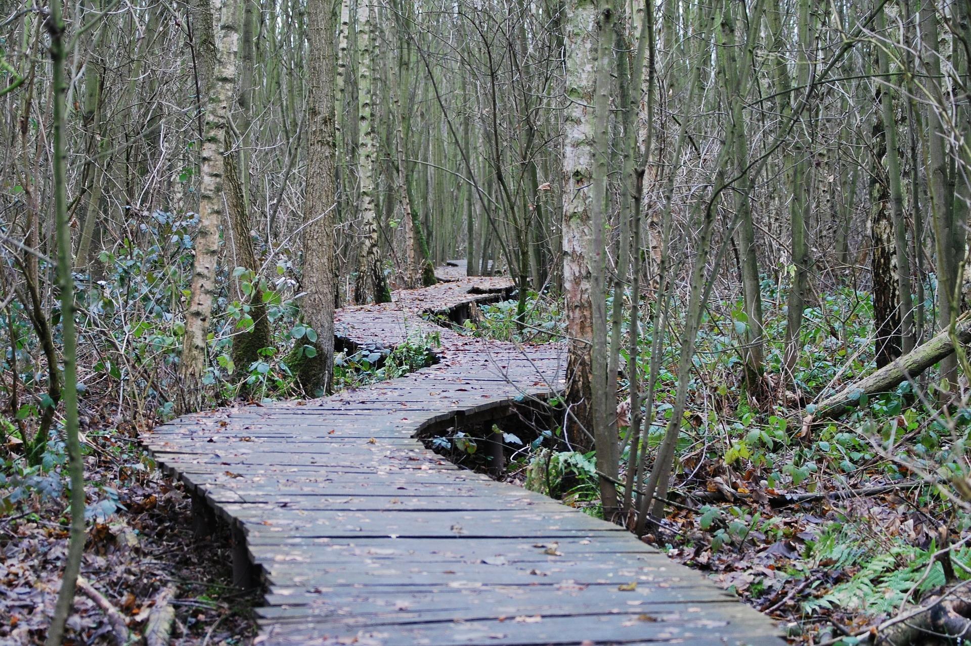 path-215325_1920